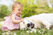 love-gorgeous-cute-girl-baby-playing-with-dog-wallpaper-hd